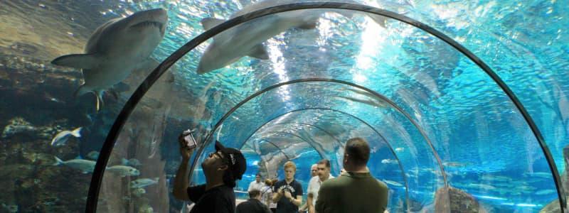 Fotografia di alcuni turisti all'interno di un tunnel dell'Aquarium di Barcellona con alcuni squali che nuotano sopra di loro