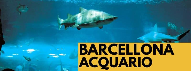 """Fotografia squali che nuotano in un acquario con rettangolo arancione in basso a destra con scritta nera """"Barcellona Acquario"""""""
